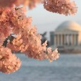 Washington DC springs to life as the National Cherry Blossom Festival opens March 20, the first day of spring, and runs to April 27, National Arbor Day.  The Festival commemorates the 100-year […]