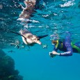 Do you dream of going on your own Charles Darwin adventure to the Galapagos? Would you like to conscript your family as crew? Well, a Lindblad Expeditions Galapagos Cruise may […]
