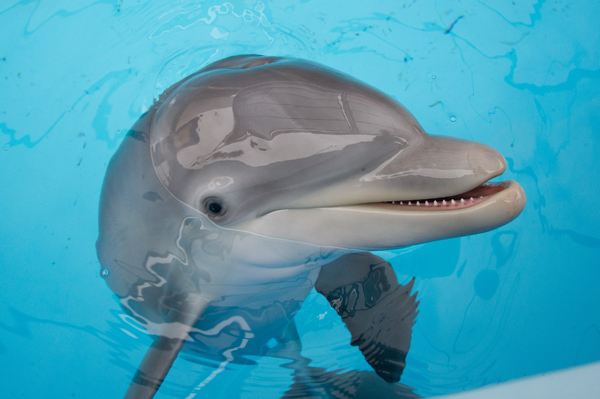 SeaWorld Orlando rescued dolphin