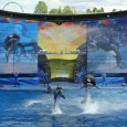 Editor's Note: The signature animal and show for SeaWorld has always been the Shamu, killer whale show. In 2011, SeaWorld Orlando unveiled an updated killer whale show titled One Ocean […]