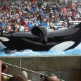 A film by director Gabriela Cowperthwaite investigates the 2010 death of SeaWorld Orlando killer whale trainer Dawn Brancheau. Magnolia Pictures' BLACKFISH opens in limited release on Friday, July 19th, but […]