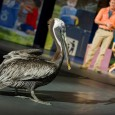 Join SeaWorld Orlando this summer for Generation Nature LIVE, a new show where you will explore nature and learn about protecting wildlife, and how YOU can make a difference and […]
