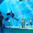 Today, SeaWorld Parks and Resorts announced plans to expand their killer whale environments and commit $10 million dollars in research and conservation efforts.  In addition, SeaWorld created an advisory panel […]