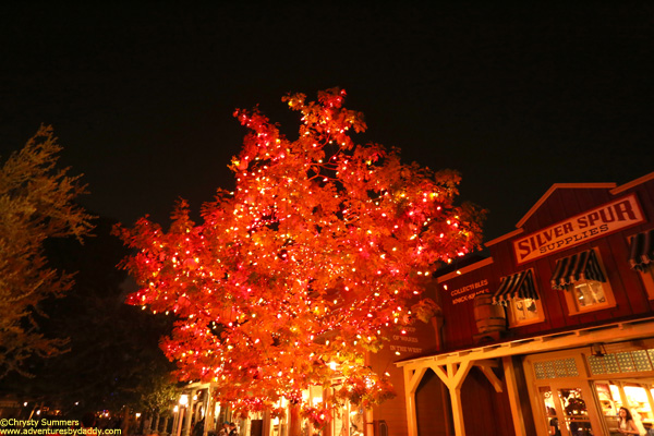 The tree is enchanting  after dark.