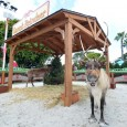 SeaWorld San Diego kicked off their Christmas Celebration this past weekend, and the park's halls are decked for the season. We attended last year's festivities and foundreal snow, yummy treats, […]