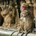 This post will contain all the official photos, trailers and news for Disneynature MONKEY KINGDOM opening April 17, 2015.  Set in the storied jungles of South Asia, MONKEY KINGDOM showcases the adventures […]
