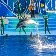 Our trip to SeaWorld San Diego this November was unprecedented.  SeaWorld employees and tour guides treated us to several behind-the-scenes looks at their facilities, including SeaWorld Rescue and a baby dolphin tank.  We […]
