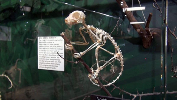 Skeletons! Animals Unveiled